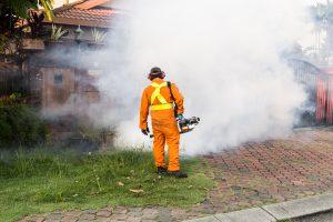 servicii dezinsectie deratizare dezinfectie